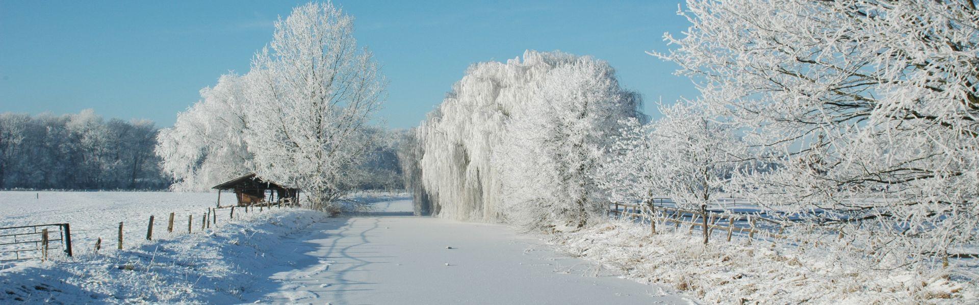 Winter Dinkel